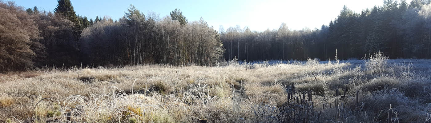 Lohmarer Wald im Winter