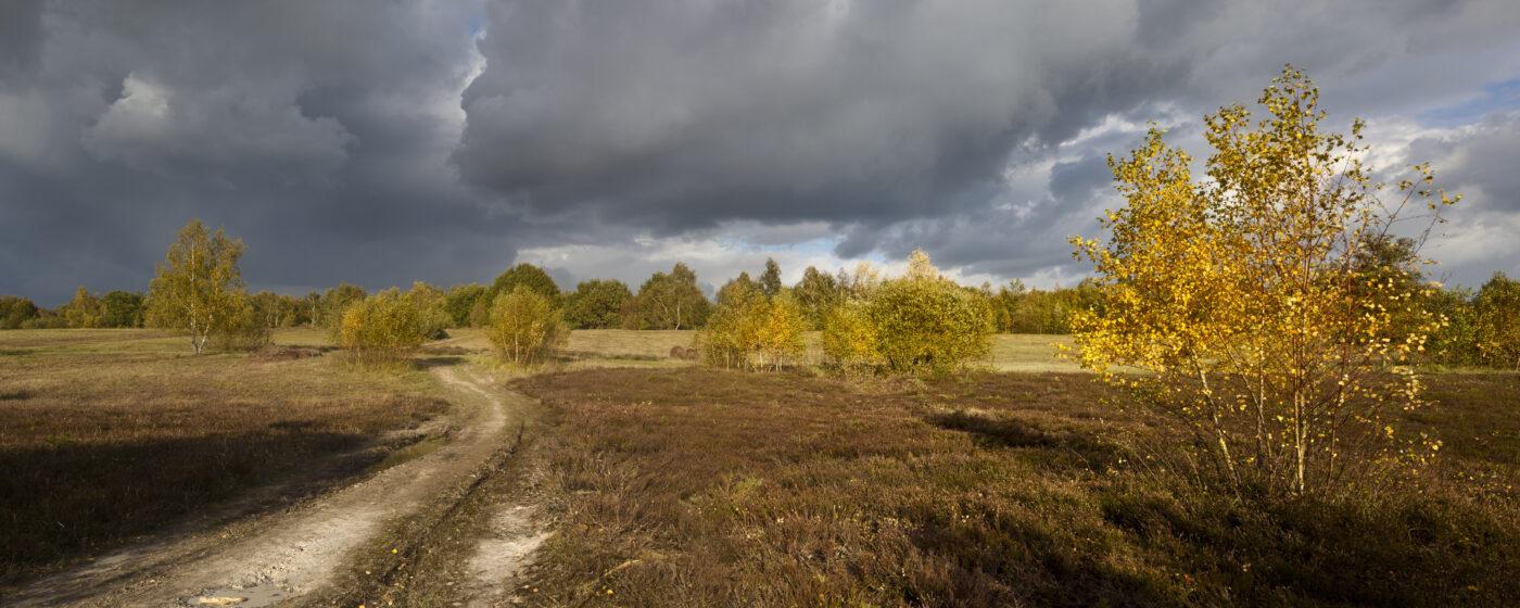 Tongrube Wahner Heide, Foto: Stefan Pütz