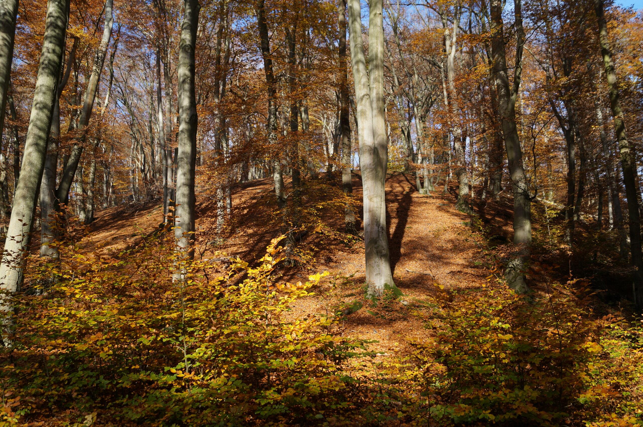 Herbstwaldwanderung in die Wahner Heide