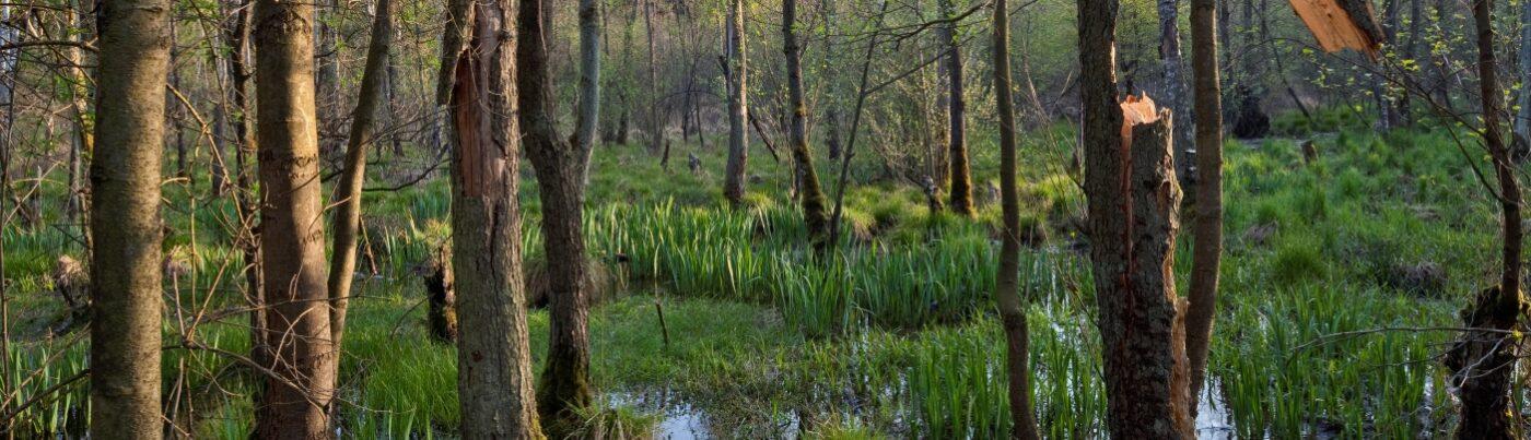 Sandbacher Heide