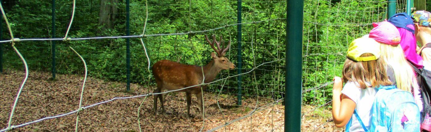 Biparcours durch Hirschpark