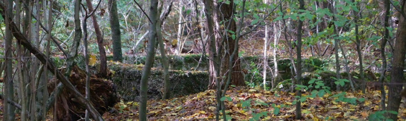 Mauerreste Ludwigshütte