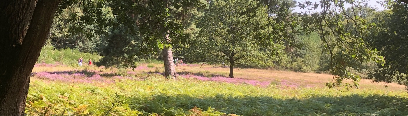 Heideblüte