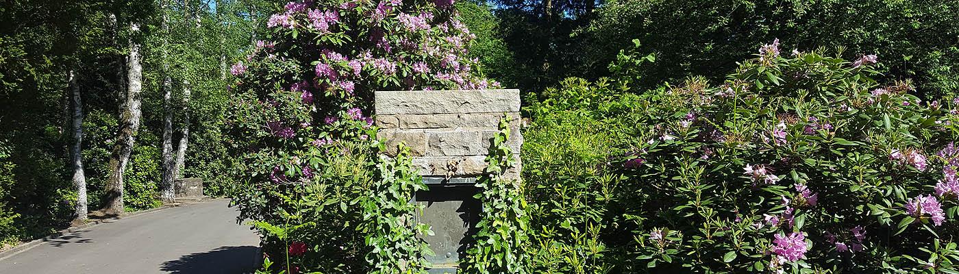 Waldfriedhof Troisdorf, Rhododendronblüte, Foto: Justus Siebert